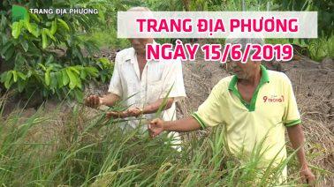 Trang tin địa phương - Thứ Bảy, 15/6/2019 - Huyện Tân Hồng